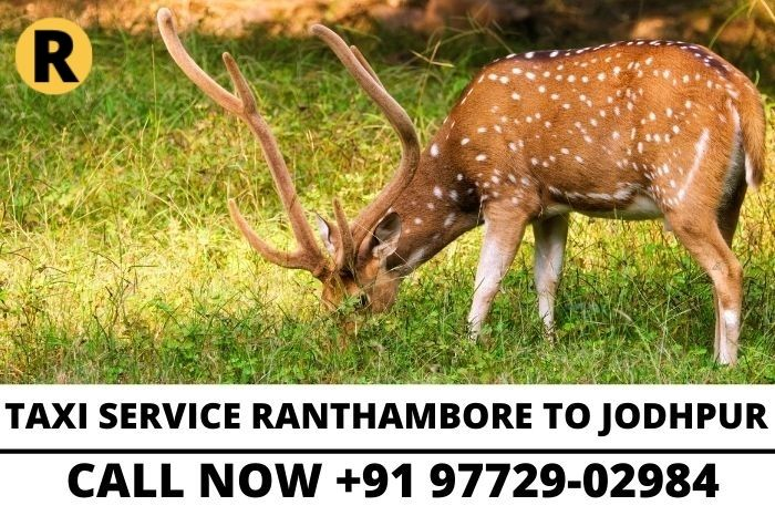 taxi service in ranthambore